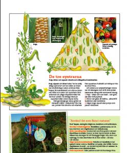 Växterna som samarbetar